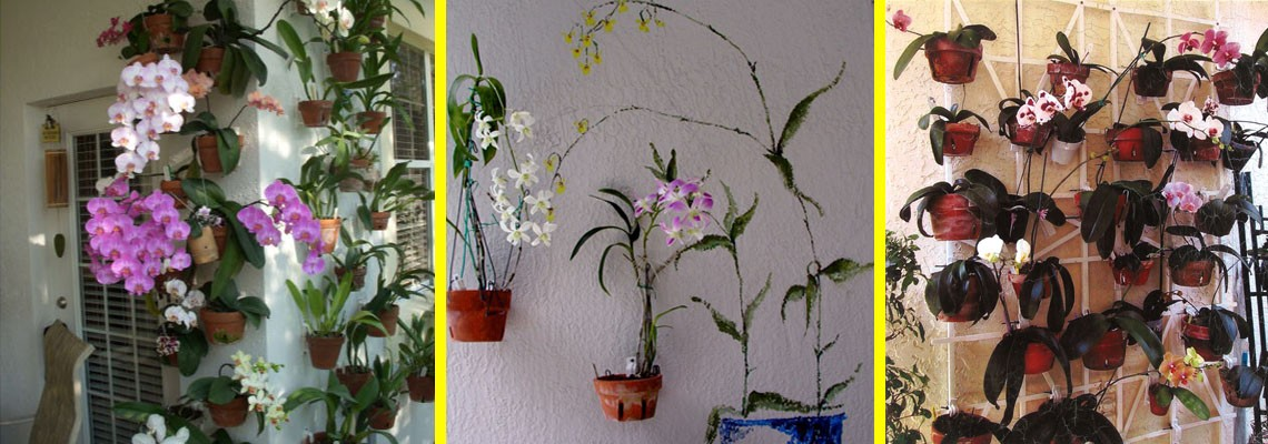 Display your orchids!