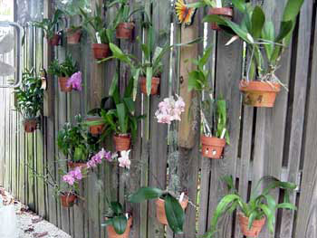 Orchid Hanger Orchid Supplies Flower Poles Hang A Pot
