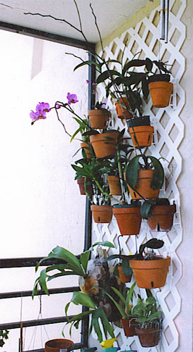 Hang Orchids Condo Garden Wall Hanging Flower Pots